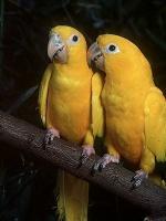 2birds